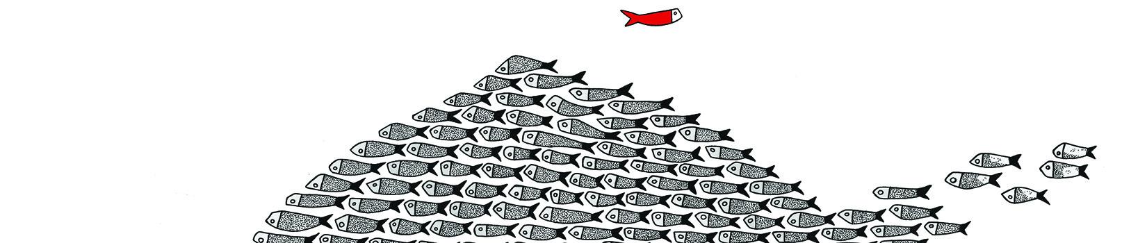 drawingfish di laura guerra